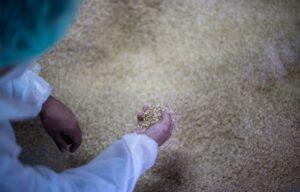 Seat chce produkować części z łusek ryżowych